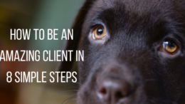 How-to-be-an-amazing-client-in-8-simple-steps